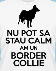 Stau Calm Am un Border Collie
