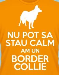 Stau Calm Am un Border Collie'