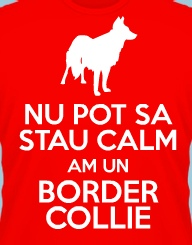 Stau Calm Am un Border Collie'